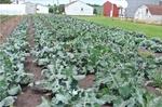 Produce Field