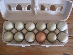 Fresh beautiful eggs!